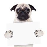 Plakatbanerhund Arkivbilder
