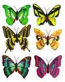 Plakboekreeks van zes multi-colored heldere kunstmatige vlinders Stock Afbeelding