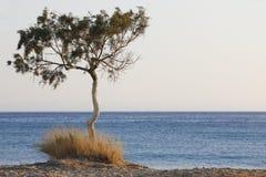 树和地中海日落的在Plakias 克利特 希腊 免版税库存图片
