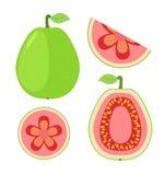 Plakken van guave, geheel exotisch fruit Vlakke beeldverhaalstijl Stock Afbeeldingen