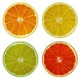 Plakken van oranje, roze die grapefruit, kalk en citroen op witte achtergrond wordt geïsoleerd Royalty-vrije Stock Foto