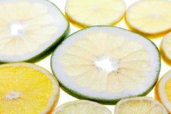 Plakkencitrusvruchten op witte achtergrond Abstract fruitpatroon Royalty-vrije Stock Fotografie