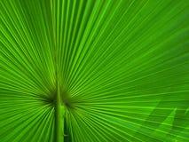 plam листьев Стоковые Фото