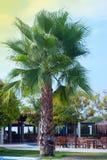 Plam-Baum-Garten oder Park lokalisiert Krasnodar Gegend, Katya Blauer Himmel Vertikales Bild ferien lizenzfreies stockbild
