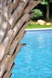 Plam Baum und Swimmingpool Lizenzfreies Stockfoto