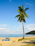 Plam on the beach Stock Images