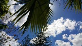 Plam del cielo de las nubes foto de archivo libre de regalías