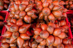 Plam fruit. Many plam fruit in thailand Stock Photo