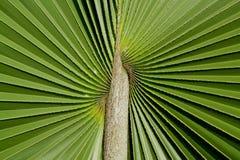 Plam Leaf on Backgroubd Stock Photo
