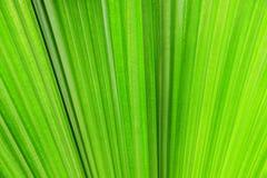 Plam leaf Stock Images