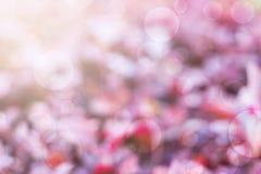 Plam purpury i bokeh tło obrazy stock