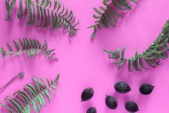 Plam seeds and fern leaves growing on a pink background. concept stock photography