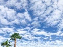 Plam träd på blå himmel med moln på ett solsken royaltyfri foto