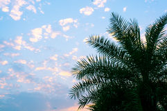Plam tree against blue sky in summer Royalty Free Stock Photo