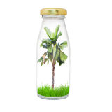 Plam tree in bottle Royalty Free Stock Photos