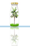 Plam tree in bottle Royalty Free Stock Image
