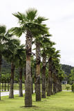Plam tree garden plantation outdoor Stock Photography