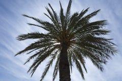 Plam tree Royalty Free Stock Photo