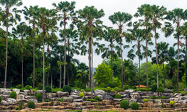 Plam tree in park. A row of plam trees in the park are arranged in front of the rock bottom Royalty Free Stock Photos