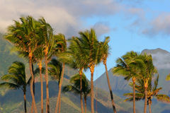 Plam tress and mountains. Palm trees mountains tropical blue green sky clounds islands calm vacations breeze wind Royalty Free Stock Photography
