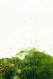 Plama deszczu kropla na okno Zdjęcia Stock
