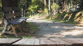 plama wizerunek drewniana ławka dla relaksować obok przejścia w parku Zdjęcia Royalty Free