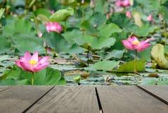 Plama wizerunek tarasowy drewno i piękne menchie kwitniemy lotosy w stawie Zdjęcia Royalty Free