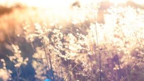 Plama wizerunku Dzicy kwiaty na polu w zmierzchu zaświecają natury tło fotografia royalty free