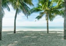 Plams della noce di cocco sulla spiaggia Immagini Stock