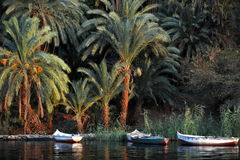 Plams nile. Nile river side water palm egypt aswan riverside plants grean eloka boat small Stock Photo