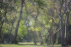 Plamy bokeh światło drzewo w ogródzie Zdjęcia Royalty Free