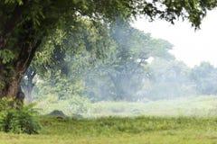 Plamy drzewa ramy przedpole fotografia royalty free