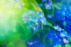 Plamy wiosny kwiatu tło Zdjęcie Stock