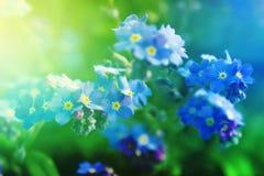 Plamy wiosny tło Obraz Royalty Free