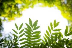 Plamy zieleń opuszcza i rozgałęzia się z Naturalnym Bokeh tłem obraz royalty free