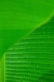Plamy zielony przedpole i zieleń banana liść zdjęcia stock
