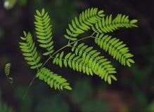 Plamy zmielony tło z młodą malutką zieloną rośliną opuszcza obrazy royalty free
