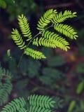 Plamy zmielony tło z młodą malutką zieloną rośliną opuszcza zdjęcie stock