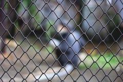 Plamy zwierzę w więzieniu Zdjęcia Stock