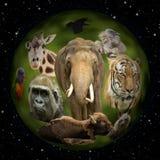 Planète animale Photos stock