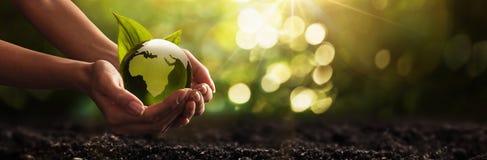 Planète verte dans des vos mains l'environnement de concept de soin de fond a isolé le petit blanc d'arbre de prise Photos libres de droits