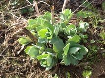 Planète verte dans le jardin Photo stock