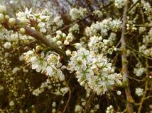 Planète verte et peu de fleur blanche sur le chemin Photo stock