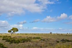 Planície de Nullarbor Fotografia de Stock Royalty Free