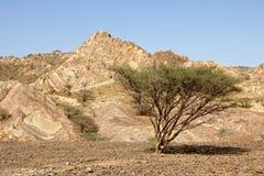 Planície omanense do cascalho Imagens de Stock Royalty Free