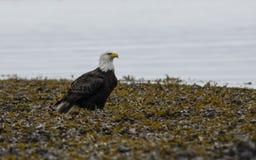 Planícies de Eagle Imagem de Stock Royalty Free