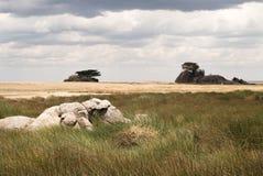 Planícies nebulosas de Serengeti Fotografia de Stock Royalty Free