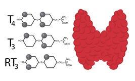 Plan de fonction thyroïde Formules chimiques structurelles des hormones thyroïdiennes illustration stock