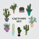 Plan färgrik illustration av suckulentväxter och kakturs i krukor Arkivfoton