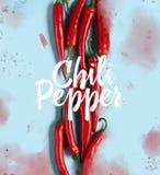 Plan lekmanna- modell för peppar för röd chili royaltyfri bild